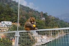 Härma att äta apelsinen på den Ramjula bron, Rishikesh Arkivfoton
