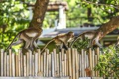 Härma familjen som går på ett staket i Krabi, Thailand royaltyfri bild