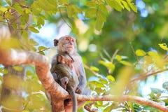 Härma familjen (som Krabba-äter macaquen) på träd Royaltyfri Foto