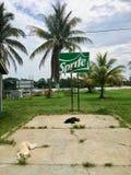 Härma flodstaden, Belize - May 28th, 2018: två tillfälliga hundkapplöpning lägger nolla royaltyfria bilder