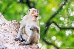Härma (Krabba-äta macaquen) på träd Royaltyfri Fotografi