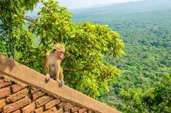 Härma på väggen av Sigiriya den forntida slotten, Asien royaltyfri fotografi