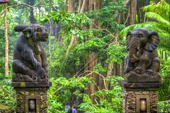 Härma skogen, Ubud, Bali, Indonesien royaltyfri fotografi
