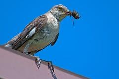 härmfågel för clipping som 3d är nordlig över white för banaframförandeskugga Arkivfoton