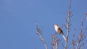 Härmfågeln tar av