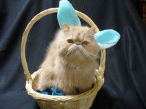 Häschen der persischen Katze lizenzfreies stockbild