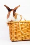 Häschen in einem Korb Lizenzfreies Stockfoto