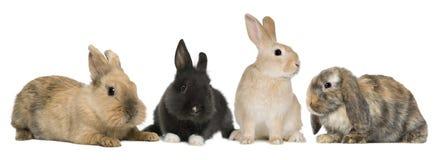 Häschenkaninchen, die vor weißem Hintergrund sitzen Stockbild
