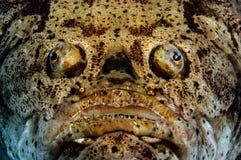 Hässliche Fische Lizenzfreies Stockbild