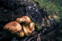 Hässliche Pilze Stockfotografie