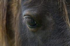 Hästögonfrans Fotografering för Bildbyråer