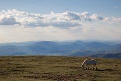 Häst överst av ett berg Royaltyfria Bilder