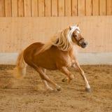 häst 0012 Royaltyfri Foto
