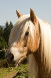 häst 0023 Arkivfoton