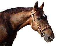 häst 01 Royaltyfria Bilder