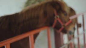Häst arkivfilmer