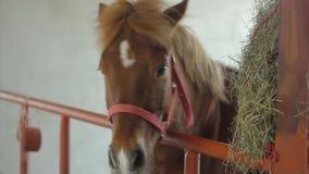 Häst stock video