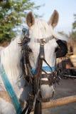 häst arkivfoto