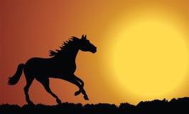 häst stock illustrationer