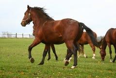 häst 14 Arkivbild