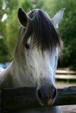 Häst #2 royaltyfri foto