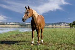 häst 2 Arkivfoto