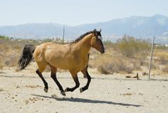 häst 2 Arkivfoton