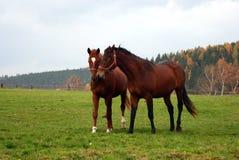 häst 27 Arkivfoton