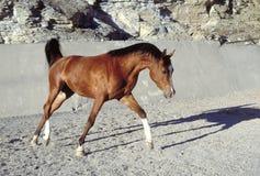 häst royaltyfri bild