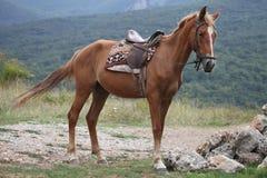 Häst. Arkivbild