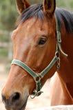 häst 4 fotografering för bildbyråer