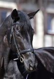 häst Arkivfoton