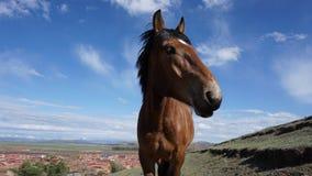Häst Fotografering för Bildbyråer