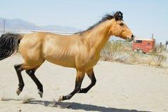 häst 6 Royaltyfri Fotografi