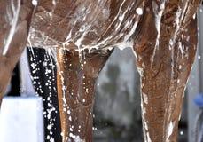 Häst- Art Bath Time fotografering för bildbyråer