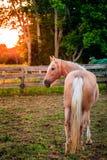Häst av en lantgård Arkivbilder