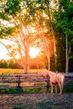 Häst av en lantgård Arkivbild