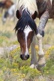 Häst & blommor Arkivfoto