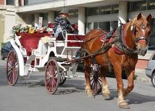 Häst dragen barnvagn Royaltyfri Fotografi