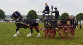 Häst dragen bryggaredray Arkivbild