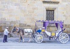 Häst dragen vagn i Guadalajara Arkivbilder