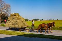 Häst dragen vagn med metallhjul Arkivfoton