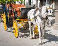Häst dragen vagn, Seville, Andalucia, Spanien Arkivbilder