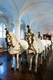 Häst dragen vagnsskärm i ett museum royaltyfri foto