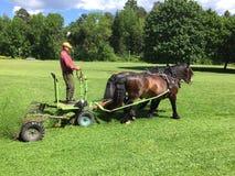 Häst-driven lawnmover arkivfoton