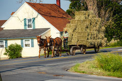 Häst drog Hay Wagon Royaltyfria Bilder