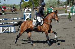Häst efter hopp Arkivfoto