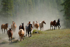 häst för 2 drev Arkivfoto