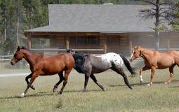 häst för 3 drev Fotografering för Bildbyråer