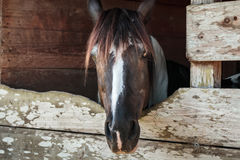Häst för bra morgon royaltyfria foton